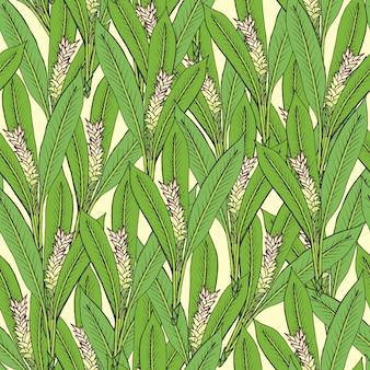 Nahtloses muster mit kurkuma. medizinische botanische blühende pflanze. hand gezeichnete grüne textur.