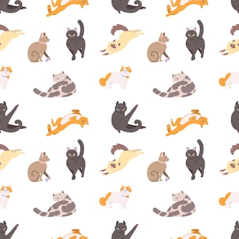 Nahtloses muster mit reinrassigen katzen, die schlafen, gehen, sich waschen und sich auf weiß strecken.