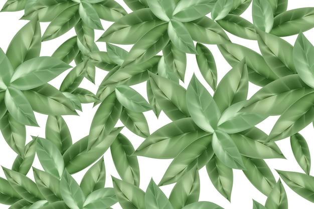 Nahtloses muster von grünem tee oder minzblättern auf weißem hintergrundvector-vorlage