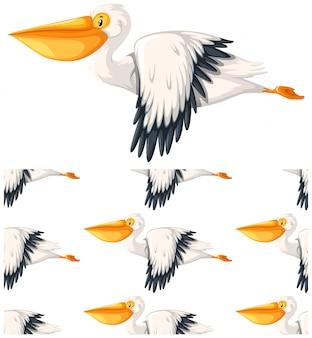 Nahtloses pelikanmuster getrennt auf weiß