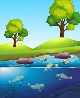 Natürliche fische im see