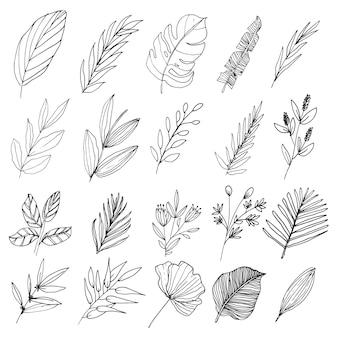 Natürliche floraler wildwaldkollektion