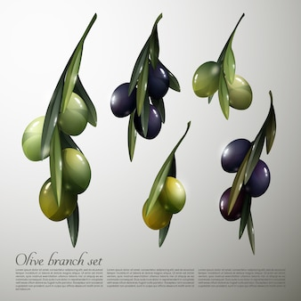 Natürliche olivenbaumzweige set