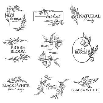 Natürliche schönheit und kräuterprodukt, schwarz-weißes blumendesign, isolierte minimalistische banner. ornamente mit blumen und rahmen, blüten und einfarbigem dekorativem laub, vektor im flachen stil