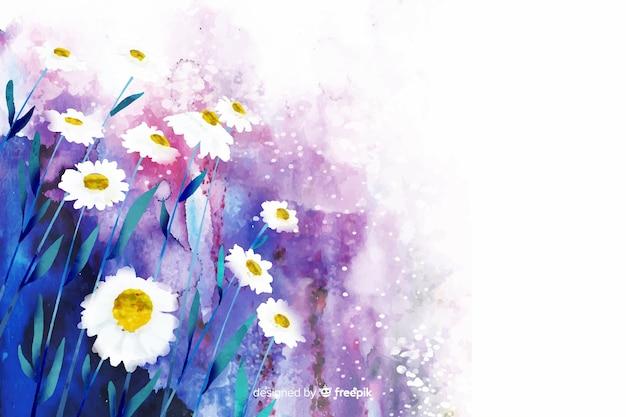 Natürlicher hintergrund des aquarells mit gänseblümchen