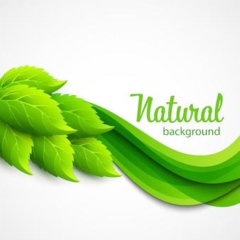 Natürlicher vektorhintergrund mit grünen federblättern