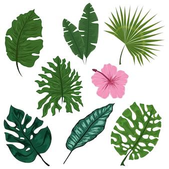 Naturblumenblätter der tropischen vegetation