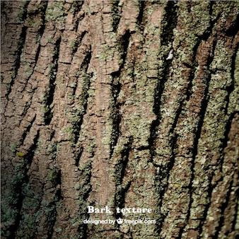 Naturholz textur