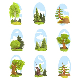 Naturlandschaft mit verschiedenen bäumen gesetzt. nadel- und laubbäume bunte illustrationen
