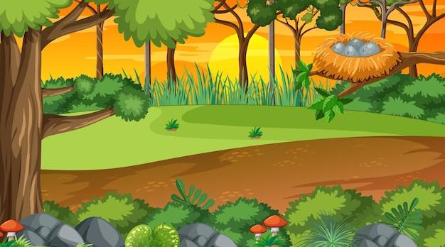 Naturwald bei sonnenuntergang zeitszene