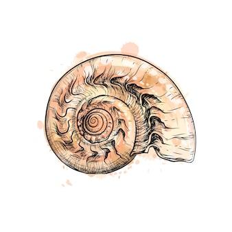 Nautilus-muschelschnitt aus einem spritzer aquarell, handgezeichnete skizze. illustration von farben