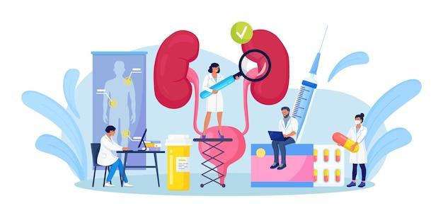 Nephrologie, urologie. winzige ärzte, die medizinische forschung, untersuchung, gesundheitscheck durchführen. harnwegsinfektion, nierenversagen, zystitis, pyelonephritis. behandlung von nieren- und blasenerkrankungen