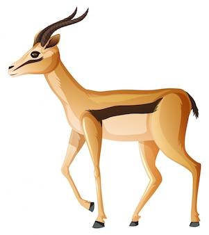 Nette anelope, die auf weiß steht