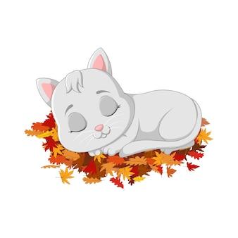 Nette katze, die auf herbstlaub schläft