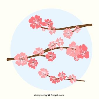Nette kirschblüte hintergrund