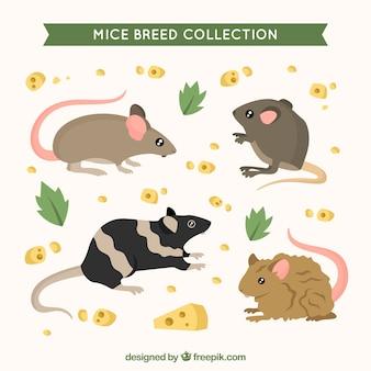 Nette mäusesammlung