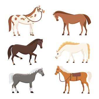 Nette pferde in verschiedenen posen vektordesign. wilde isolierte vektorschläuche der karikaturfarm. sammlung von stehenden tierpferden. andere silhouette