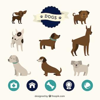 Nette sammlung von hunden