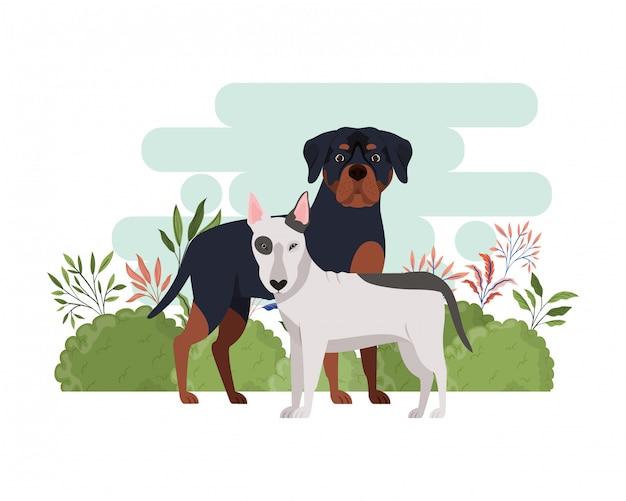 Nette und entzückende hunde auf weiß