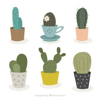 Nette vielfalt des ursprünglichen kaktus