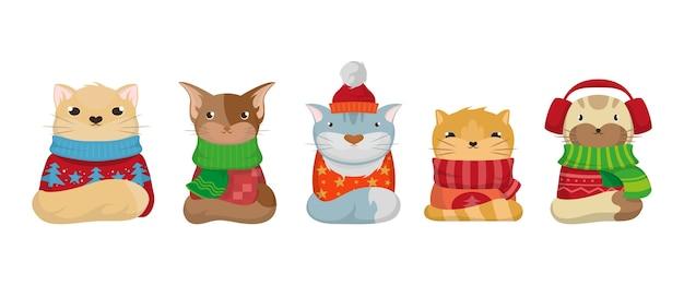 Nette weihnachtskatzen mit pullovern
