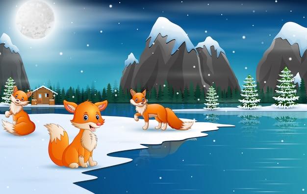 Nette winterfüchse, die fallenden schnee genießen
