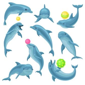 Netter blauer delphinsatz, delphinspringen und performances tricks mit ball für unterhaltungsshow illustration auf weißem hintergrund