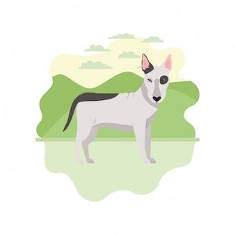 Netter bullterrierhund auf weiß