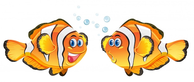 Netter clownfish auf weißem hintergrund