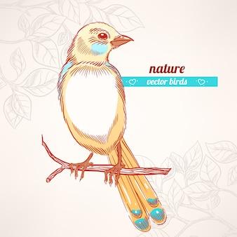 Netter gelber und blauer vogel