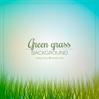 Netter hintergrund des grünen grases und des himmels