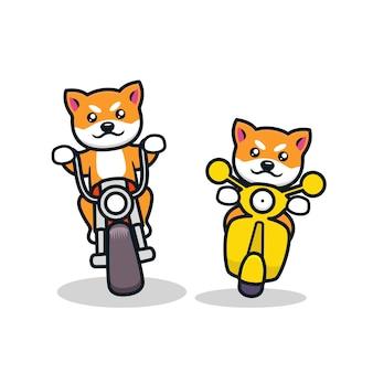 Netter hund, der motorrad in einem rennen reitet