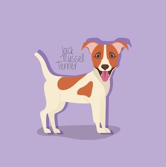 Netter jack russell terrier-hundehaustiercharakter