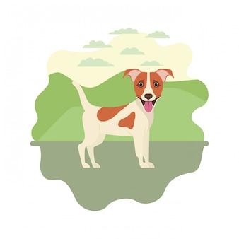 Netter jack- russellerrierhund auf weiß