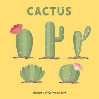 Netter kaktus mit flachem design