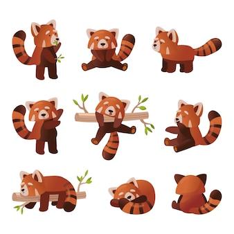 Netter roter panda-cartoon-satz