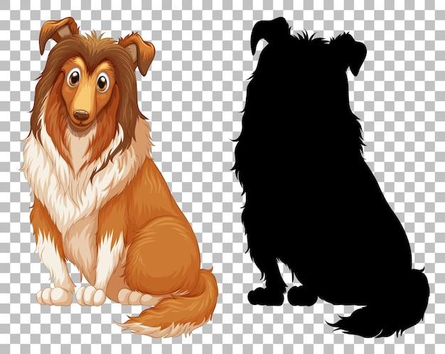 Netter shetland-schäferhund und seine silhouette auf transparent