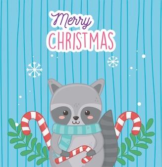 Netter waschbär mit zuckerstangen verlässt frohe weihnachten