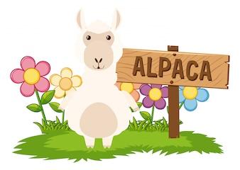 Nettes Alpaka im Garten