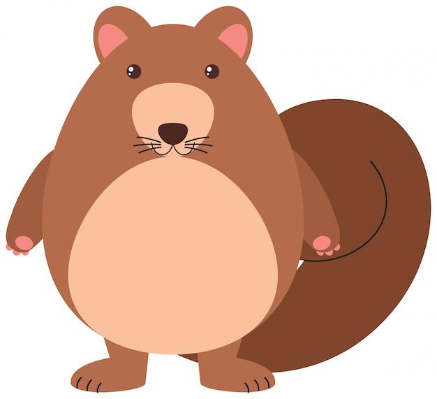Nettes eichhörnchen