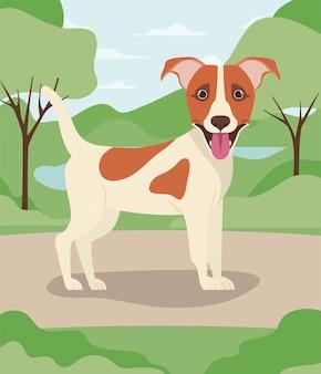 Nettes jack russell terrier-hundehaustier im lager
