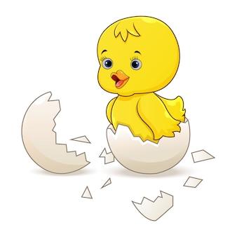 Nettes kleines karikaturküken schlüpfte aus einem ei