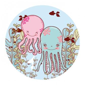 Nettes krakenpaar mit algenpflanzen