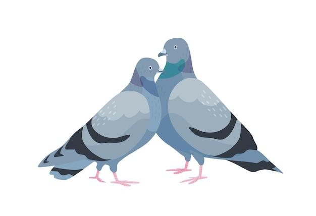 Nettes paar tauben. weibliche und männliche vögel in der liebe stehen zusammen. paar schatztiere isoliert auf weißem hintergrund. zwei romantische tauben. vektor-illustration im flachen cartoon-stil.