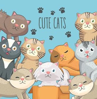 Neun süße katzen