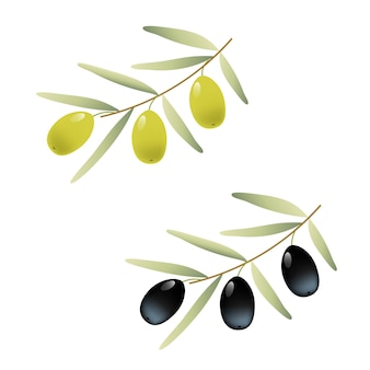 Niederlassungsillustration der grünen und schwarzen oliven