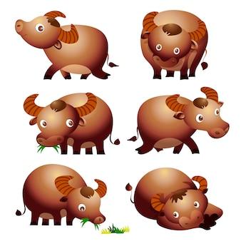 Niedliche büffelkarikatur vectoe viele aktionen