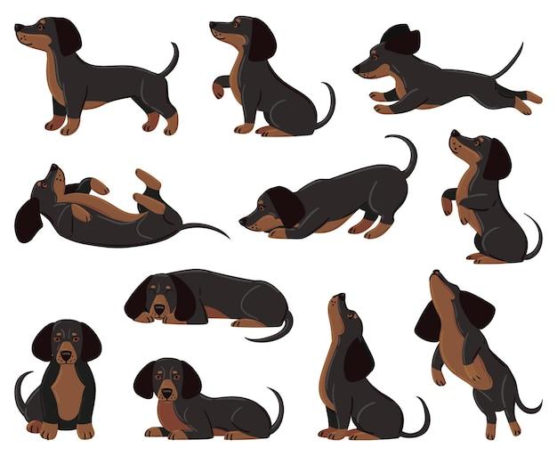 Niedliche cartoon-dackel-hunderasse in verschiedenen posen. dackel liebenswerter charakter, der schläft, spazieren geht, vektorillustrationssatz spielt. heimischer dackel als haustier