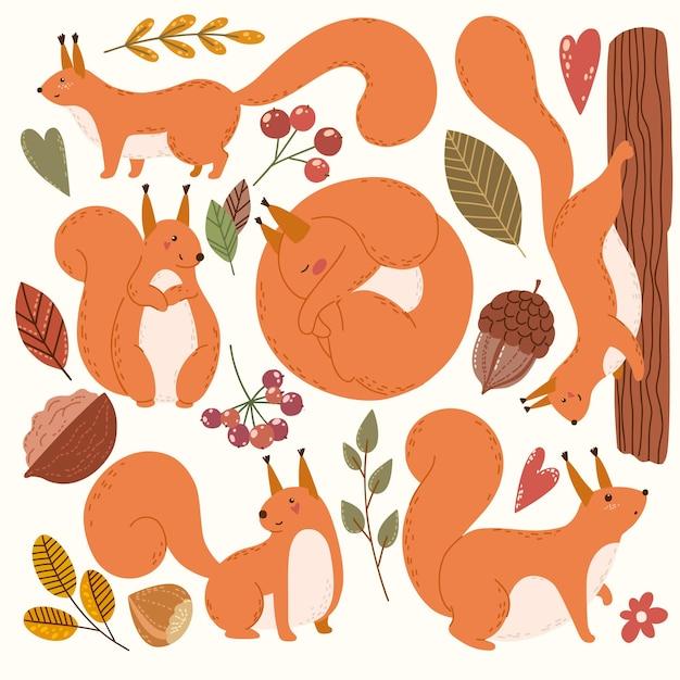 Niedliche eichhörnchen und fallen clipart-elemente von hand gezeichnet
