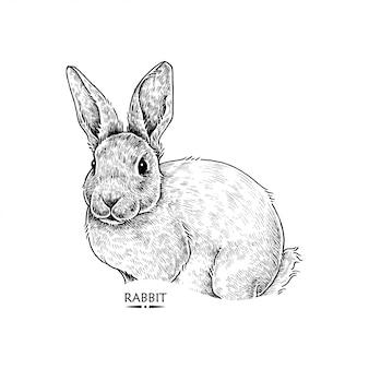 Niedliche kaninchen illustration